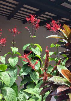 Flores trepando al cielo.Asunción-Paraguay