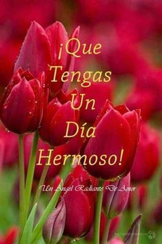 Good Morning Flowers, Positive Quotes, Words, Instagram, Mina, Mexican, People, Cute Good Morning, Good Night