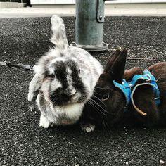 There's our oldest rabbits Tintti and Peltsi. Tintti is unfortunately now resting in peace ( Sniff ). Peltsi lives alone now.  Tässä on vanhimmat kanimme Tintti ja Peltsi. Valitettavasti Tintti on nyt kuollut ( Yhyy ). Peltsi elää nyt yksin.