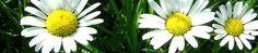 über Gartenpflege & Pflanzenhandel