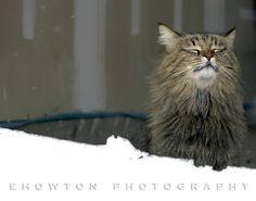 CATS! Enjoying a quiet morning after Winter Storm Q.