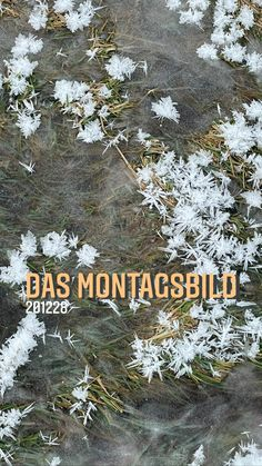 the monday picture 201228 - das montagsbild 201228 'snow flowers' by sueessART