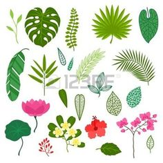 33510179-set-of-stylized-tropical-plants-leaves-and-flowers.jpg (350×350)