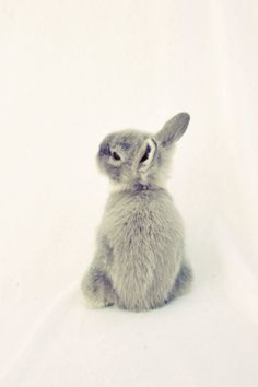 Bunny Rabbit Nursery Childs Room Vertical Art Print Photography 8x10 Photography Dreamy Rabbit White and Grey Fine Art Original Print