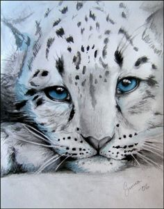Image detail for -snow leopard cub by ~makebelief on deviantART art Big Cats Art, Cat Art, Beautiful Cats, Animals Beautiful, Snow Leopard Drawing, Snow Leopard Tattoo, Tiger Art, Tiger Cubs, Tiger Tiger