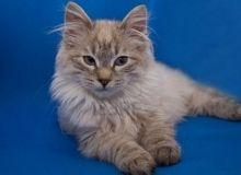 Отличающаяся великолепием фотокарточка с котом