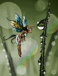 Dewdrop Faery by *daleicious on deviantART