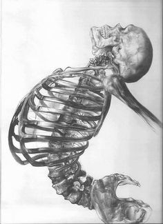 Human skeleton - ballpoint pen drawing by young artist Andrea Schillaci from Italy Skeleton Drawings, Cool Drawings, Skeleton Art, Skeleton Body, Mermaid Skeleton, Illustration Inspiration, Illustration Art, Medical Illustration, Skull Art