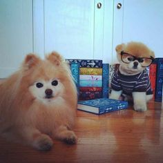 When Buddy and Boo were intellectuals. | The 40 Cutest Pictures Of Boo And Buddy
