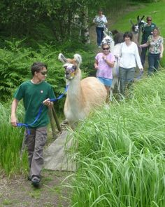 llama_walk