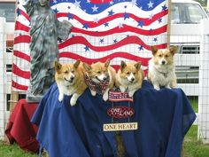 One Flag, One Land, One Heart, and Too Much Cuteness | 7 Of The Cutest 4th Of July CorgiPictures