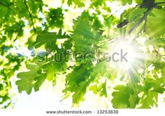 Sun beams and green leaves - stock photo