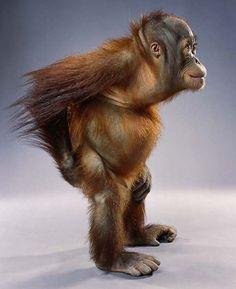 Monkey Portraits – Jill Greenberg