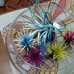 Gorgeous air plant and 6 ounces of Spanish Moss combo. Colored with a delicate floral paint used on live plants and flowers. Air Plants Care, Plant Care, Spanish Moss, Colorful Garden, Live Plants, Rainbow Colors, Indoor Plants, Exotic, Succulents
