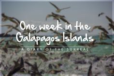 Use this to plan a Galapagos itinerary
