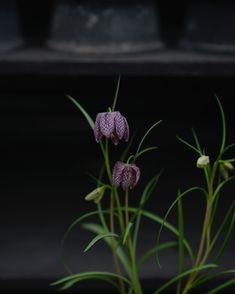 """Victoria Skoglund on Instagram: """"Det finns vissa växter som jag bär närmare mitt hjärta än andra . Så pass nära att jag kan känna mitt hjärta slå extra när jag ser eller…"""" Victoria, Plants, Instagram, Plant, Planets"""