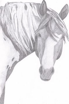 85X11in Original Paint Horse Sketch by IndigoTradingCo on Etsy, $5.00