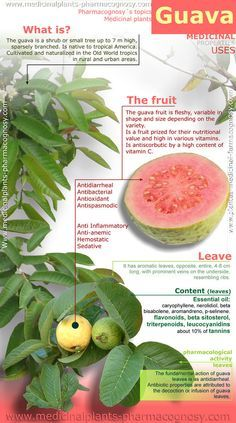Guava benefits. Infography - Pharmacognosy - Medicinal Plants
