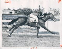 Ponder. 1949 Kentucky Derby winner. Jockey: Steve Brooks. Winning time: 2:04 1/5