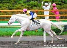 White Vessel (Kurofune x Shirayukihime), a rare white TB