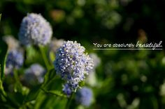 Dyamond in the Rough.: I love you so much, let me tell you all about it. My Way of Saying Thank You.