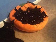 Gatitos negros. Son preciosos los pequeños pumas.