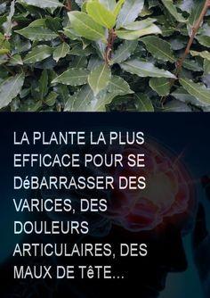 La plante la plus efficace pour se débarrasser des varices, des douleurs articulaires, des maux de tête… #plante #douleur #douleurs