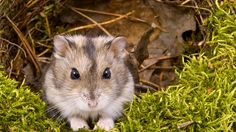 Dead & buried Hamster emerges from grave alive and well. (story from @Gawker)