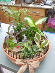 I am liking the little gardens in pots - the plants in here are BABY PAM TREE, HOSTAS, CREEPER, YELLOW SEDUM
