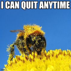 54 Best Bee Funny Images Bees Fanny Pics Frases