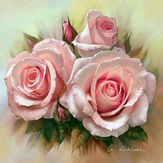 Розовые розы!