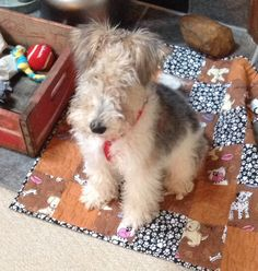 Wire Haired Fox Terrier Puppy (Repinned from Marsha Yoshi's Pinterest board: terriers and friends)