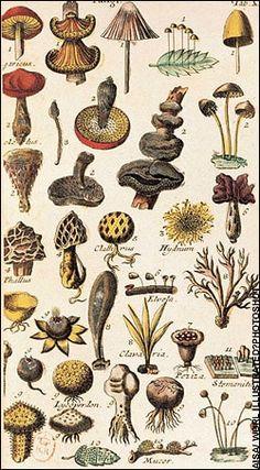 http://www.telegraph.co.uk/culture/books/non_fictionreviews/3672008/Botanical-hunter-gatherers.html