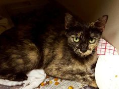 10/09/16 SL~~~9/3***KEYARA - ID#A459990 - URGENT - Harris County Animal Shelter in Houston, Texas…