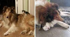 Kotów i psów spać razem Od pierwszego dnia Poznali | Bored Panda