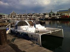 2 tank dives are done on this motorised catamaran which departs from the V&A. The seals know that we are the ones that arrive in style V&a Waterfront, Kelp Forest, The V&a, We Are The Ones, Catamaran, Cape Town, Snorkeling, Scuba Diving, Seals