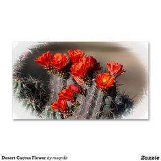 Desert Cactus Flower Double-Sided Standard Business Cards (Pack Of 100)