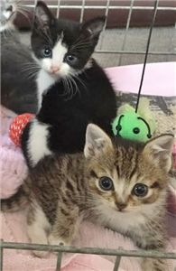 Tinkerbell & Poppet - Ready for Adoption