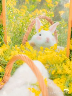Fantasy World, Scenery, Fancy, Cute, Animals, Aesthetics, Animales, Landscape, Animaux