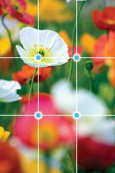 Photo tips: Rule of Thirds - I hate when people dont follow this rule