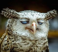 Stoned owl is stoned.