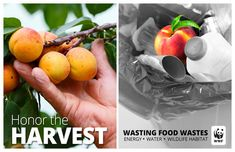 The Wild Classroom food waste warrior toolkit provides lessons, activities and resources to share how what we eat and what we throw away impacts our planet by creating a classroom in the cafeteria. Green School, Food Waste, A Food, Harvest, Fruit, Breakfast, Morning Coffee