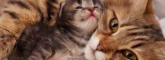 Voici 8 des plus belles photos de mamans et leur progéniture!!