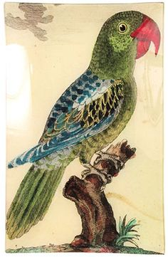 @John Derian #7 Parrot Tray