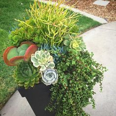 Outdoor Succulent Container Garden by Succulents Are For Sharing (@succulents_are_for_sharing)