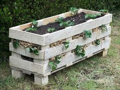 Best way to grow strawberries! See the many ways of growing strawberries in containers, strawberry planters and grow strawberries in pots Diy Planters, Garden Planters, Garden Beds, Planter Ideas, Pallet Planters, Planter Boxes, Garden Cart, Garden Soil, Herb Garden