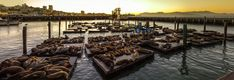 Sea lions relaxing at Pier 39. Image by Bill Christian / CC BY