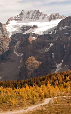 Larch Valley, Banff National Park, Alberta, Canada ( Valley of the 10 Peaks)