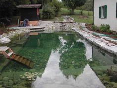 Il y a pas longtemps qu'on a rempli l'eau - et déjà on pourrait se baigner dans la piscine naturelle./ Soon after filling and already swimmable.