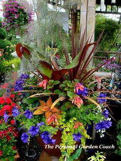 Love color for front door pot